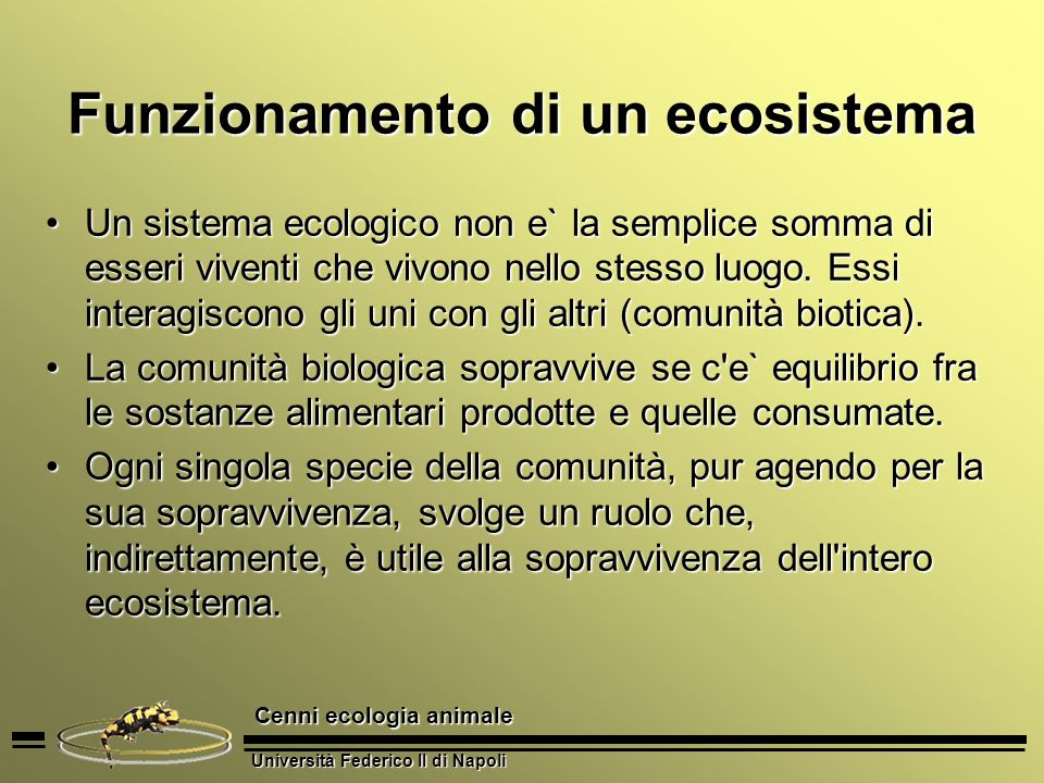 Funzionamento di un ecosistema
