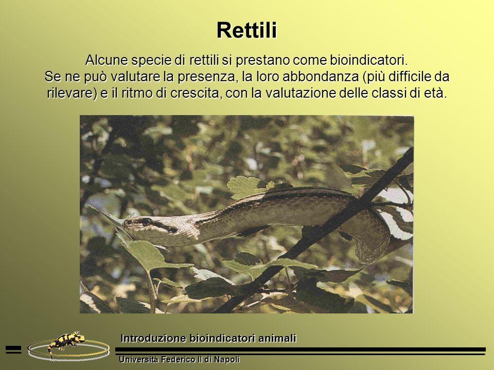 Alcune specie di rettili si prestano come bioindicatori.