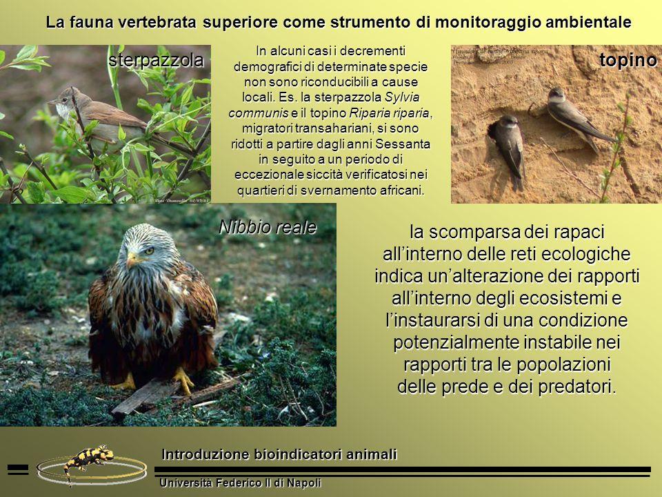 delle prede e dei predatori.