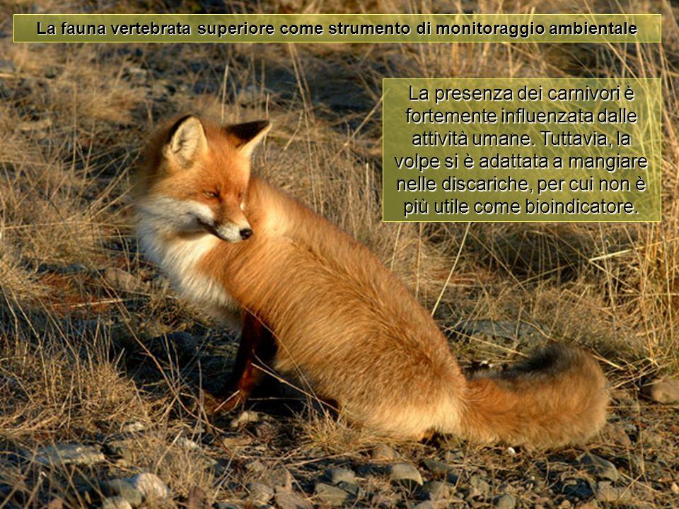La fauna vertebrata superiore come strumento di monitoraggio ambientale