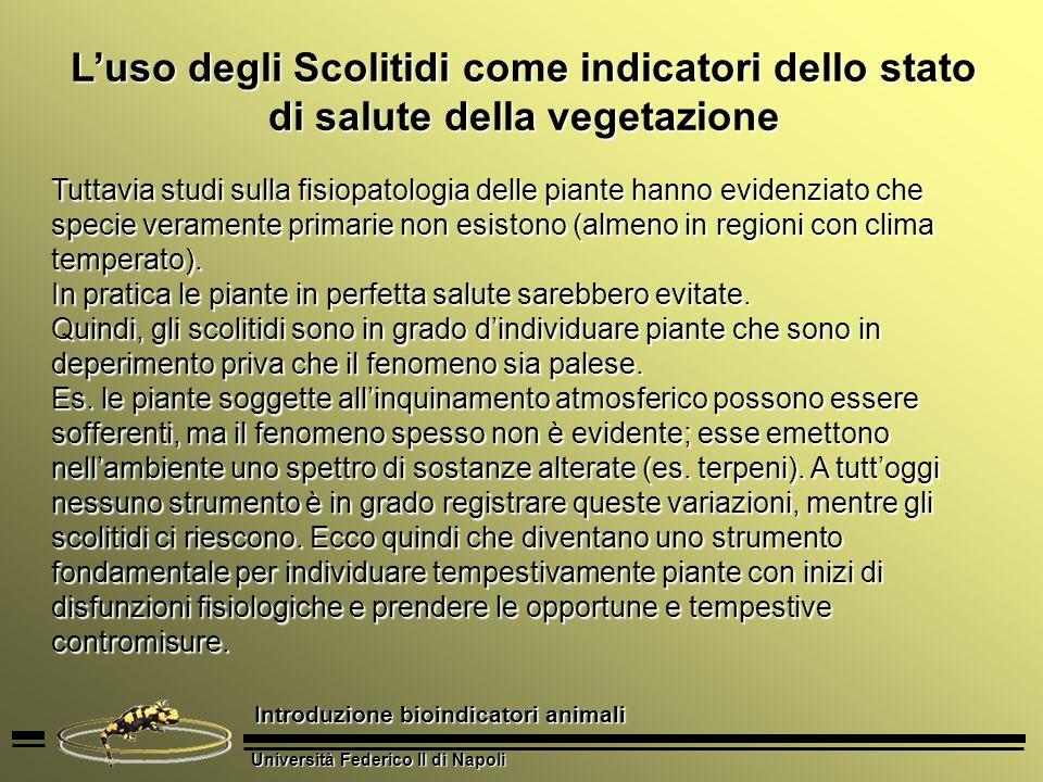 L'uso degli Scolitidi come indicatori dello stato di salute della vegetazione