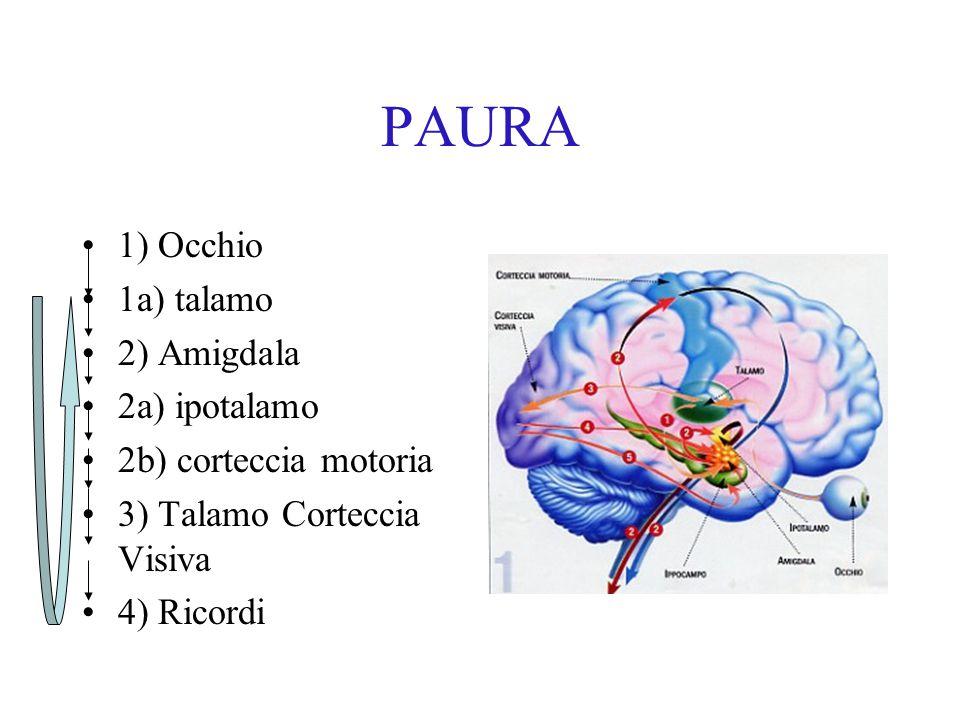 PAURA 1) Occhio 1a) talamo 2) Amigdala 2a) ipotalamo