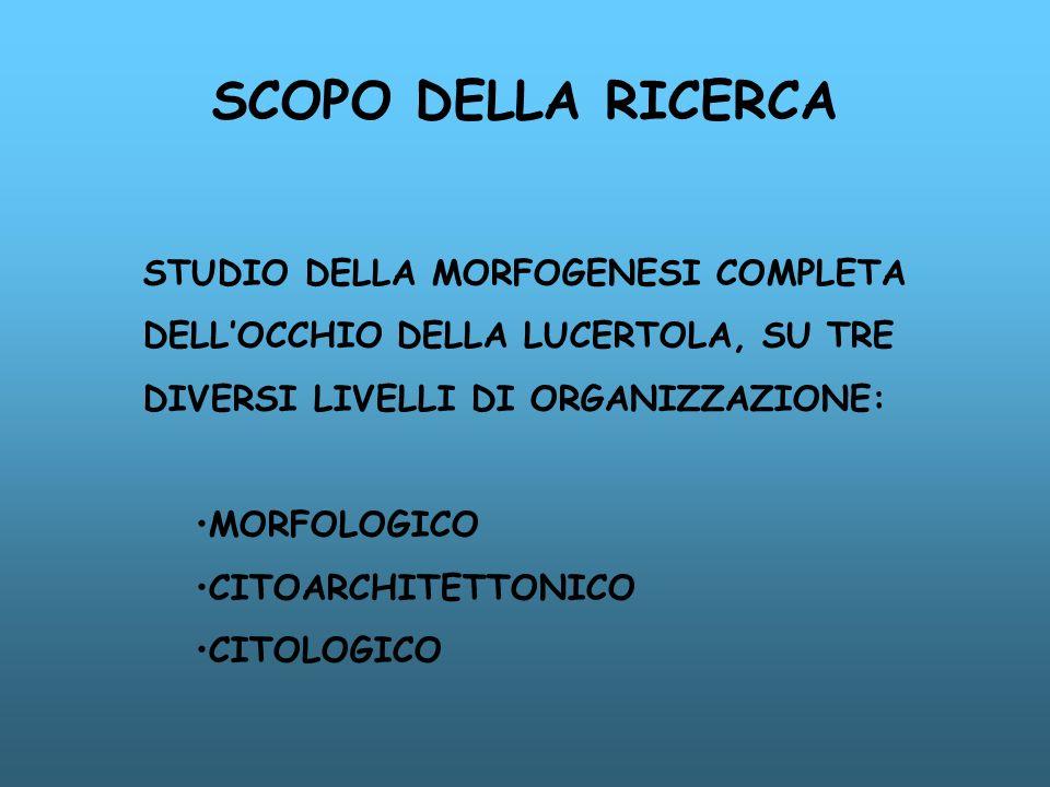 SCOPO DELLA RICERCA STUDIO DELLA MORFOGENESI COMPLETA