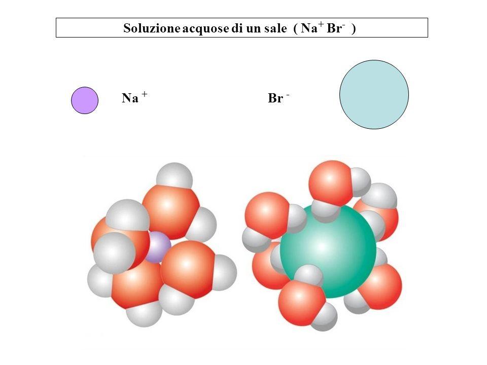 Soluzione acquose di un sale ( Na+ Br- )
