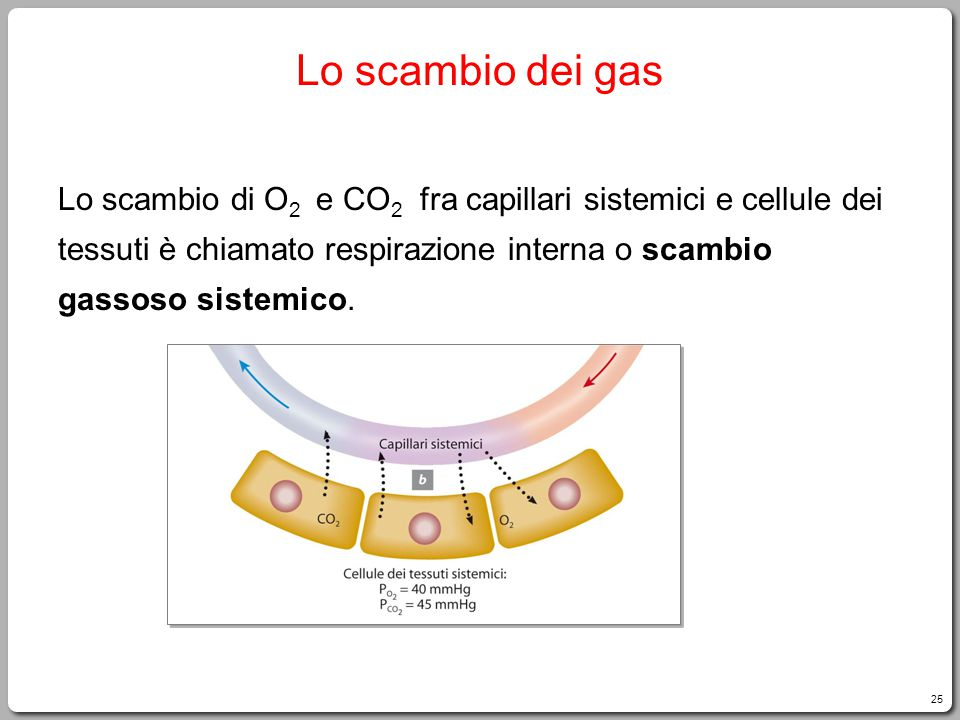 Lo scambio dei gas