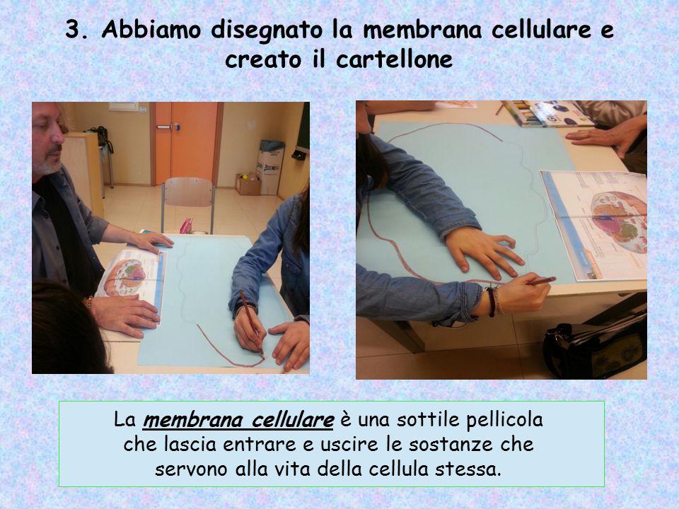 3. Abbiamo disegnato la membrana cellulare e creato il cartellone