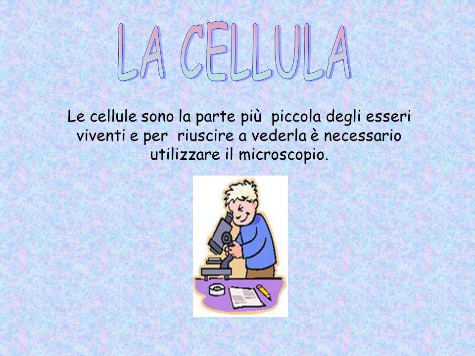 LA CELLULA Le cellule sono la parte più piccola degli esseri viventi e per riuscire a vederla è necessario utilizzare il microscopio.