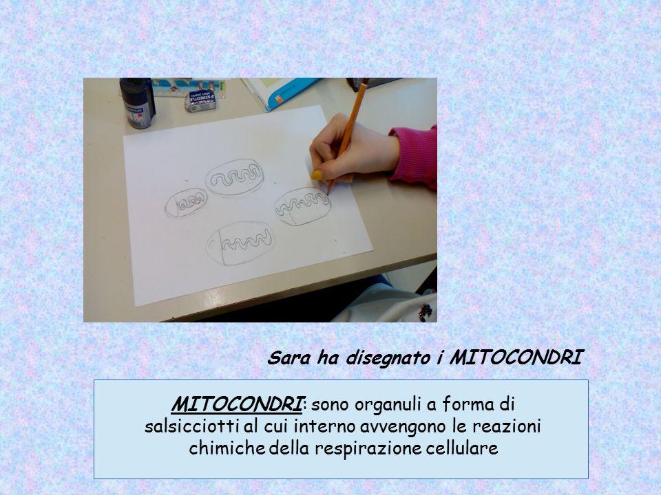 Sara ha disegnato i MITOCONDRI