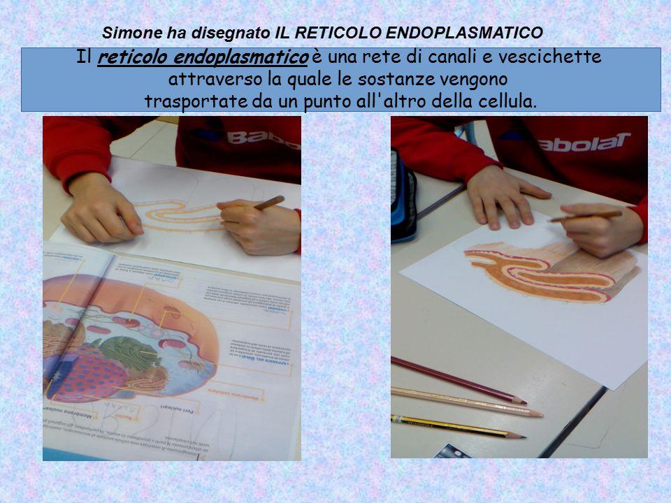 Il reticolo endoplasmatico è una rete di canali e vescichette