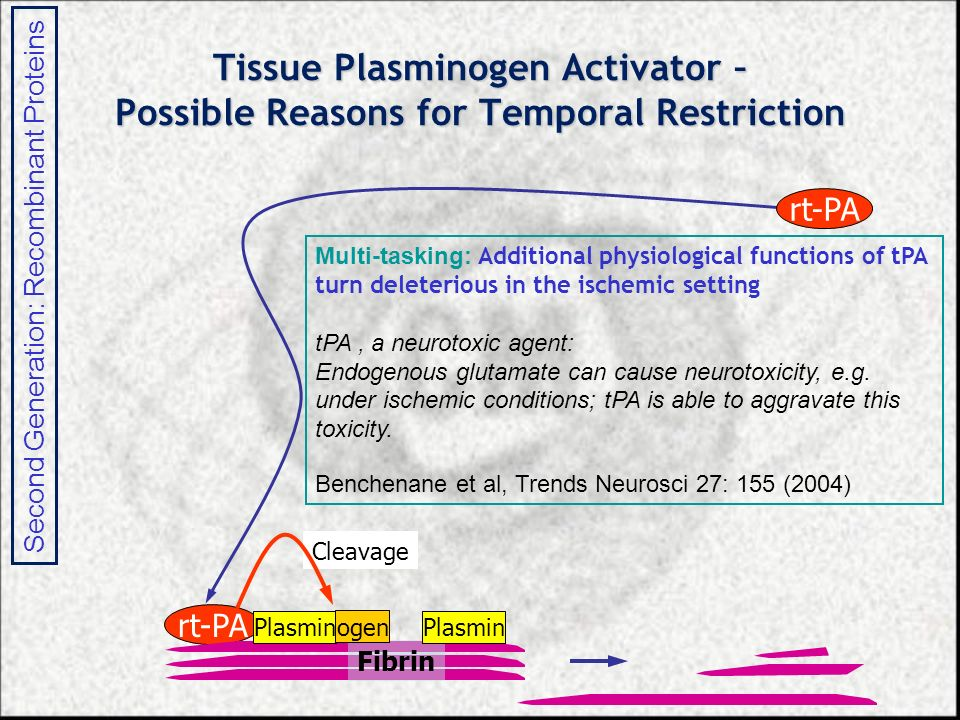 Tissue Plasminogen Activator – Possible Reasons for Temporal Restriction