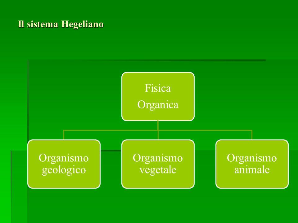 Fisica Organica Organismo geologico Organismo vegetale