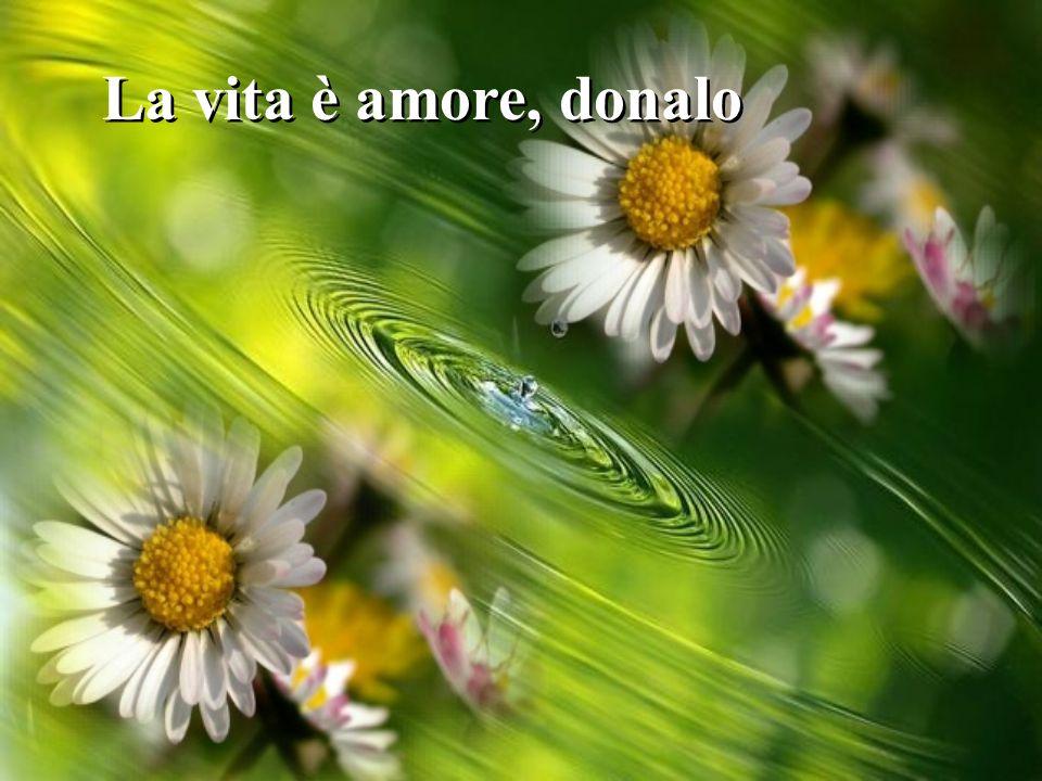 La vita è amore, donalo