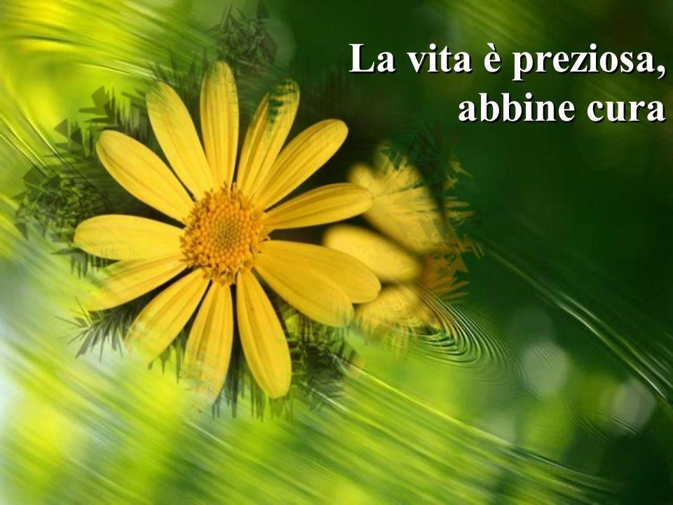 La vita è preziosa, abbine cura