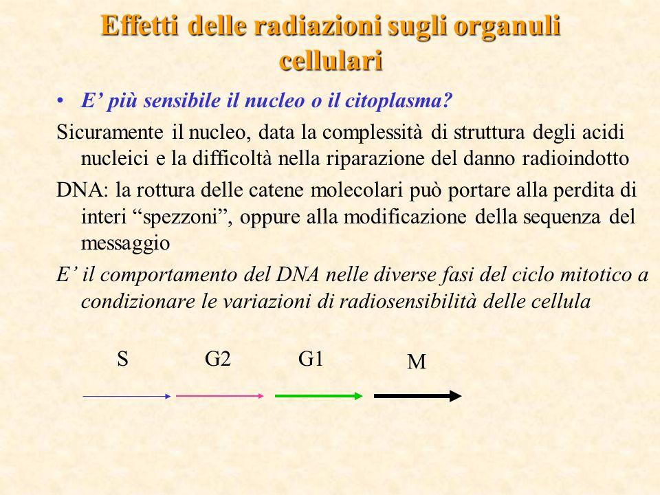 Effetti delle radiazioni sugli organuli cellulari