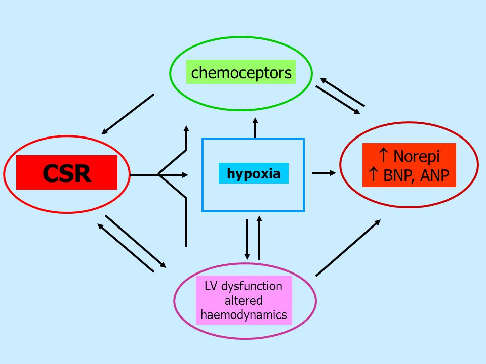 CSR chemoceptors  Norepi  BNP, ANP hypoxia LV dysfunction altered