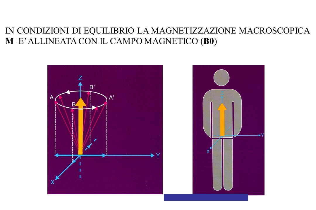 IN CONDIZIONI DI EQUILIBRIO LA MAGNETIZZAZIONE MACROSCOPICA M E' ALLINEATA CON IL CAMPO MAGNETICO (B0)