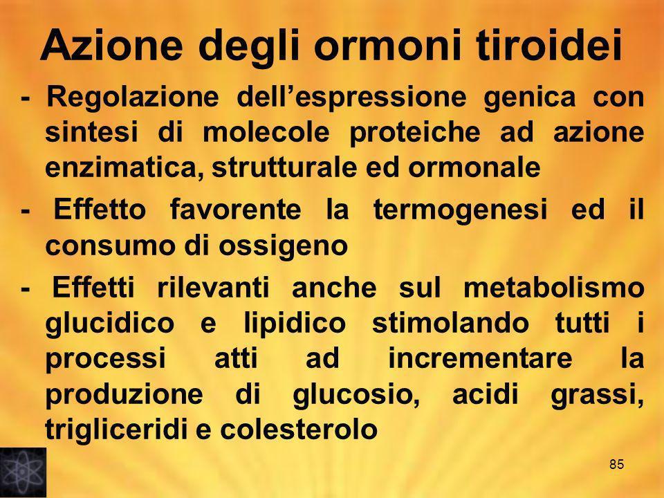 Azione degli ormoni tiroidei