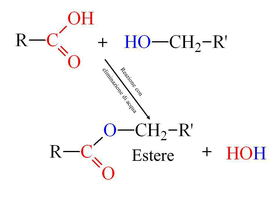 + eliminazione di acqua Reazione con + Estere