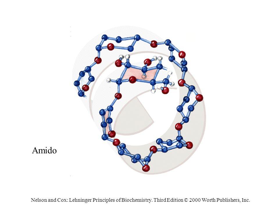 Amido Nelson and Cox: Lehninger Principles of Biochemistry.