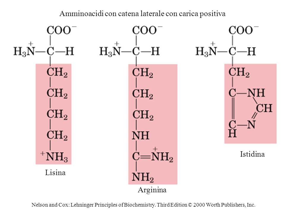Amminoacidi con catena laterale con carica positiva