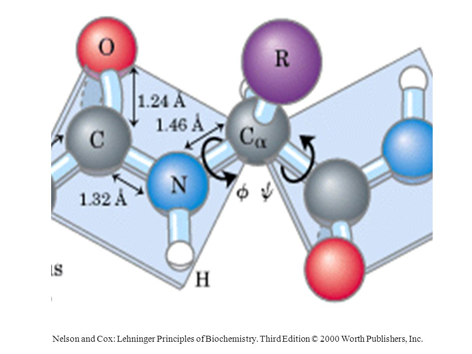 Nelson and Cox: Lehninger Principles of Biochemistry