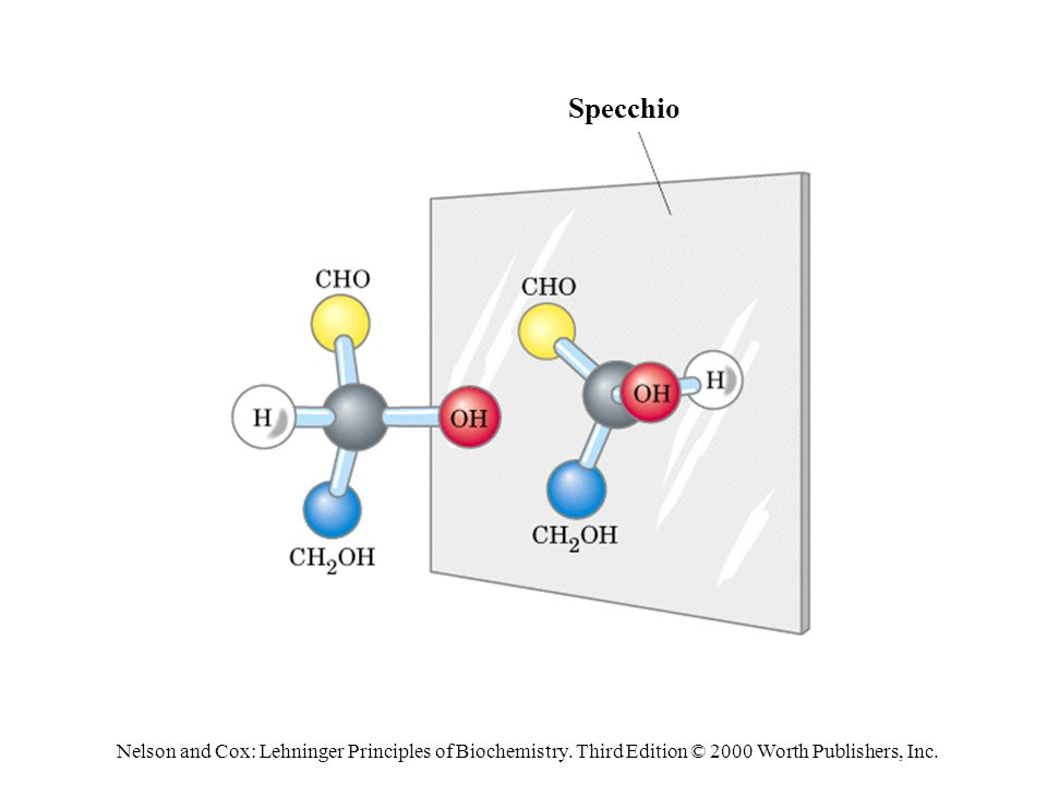 Specchio Nelson and Cox: Lehninger Principles of Biochemistry.