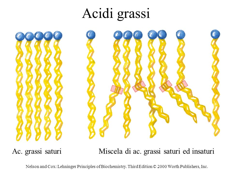 Acidi grassi Ac. grassi saturi