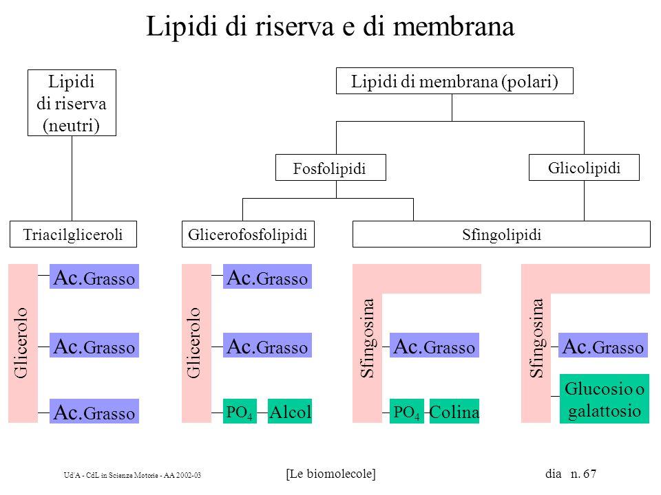 Lipidi di riserva e di membrana