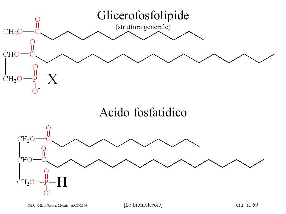 Glicerofosfolipide (struttura generale)