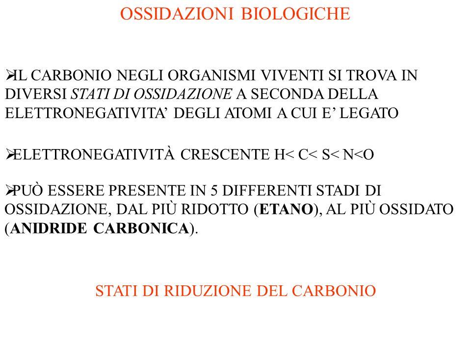 OSSIDAZIONI BIOLOGICHE