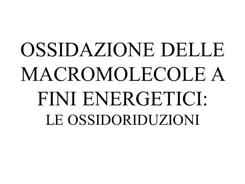 OSSIDAZIONE DELLE MACROMOLECOLE A FINI ENERGETICI: