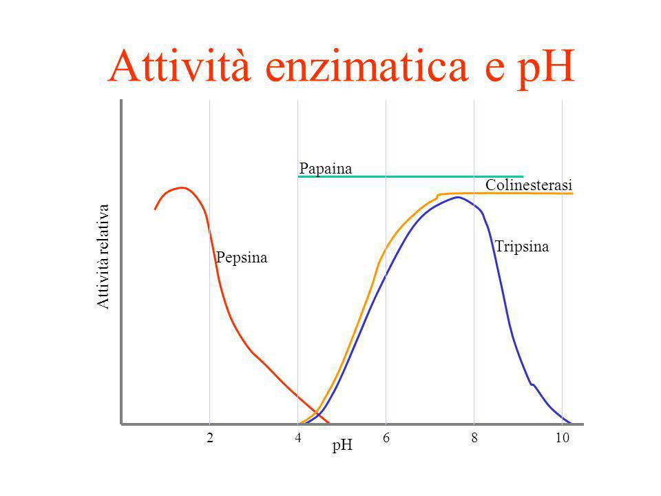 Attività enzimatica e pH