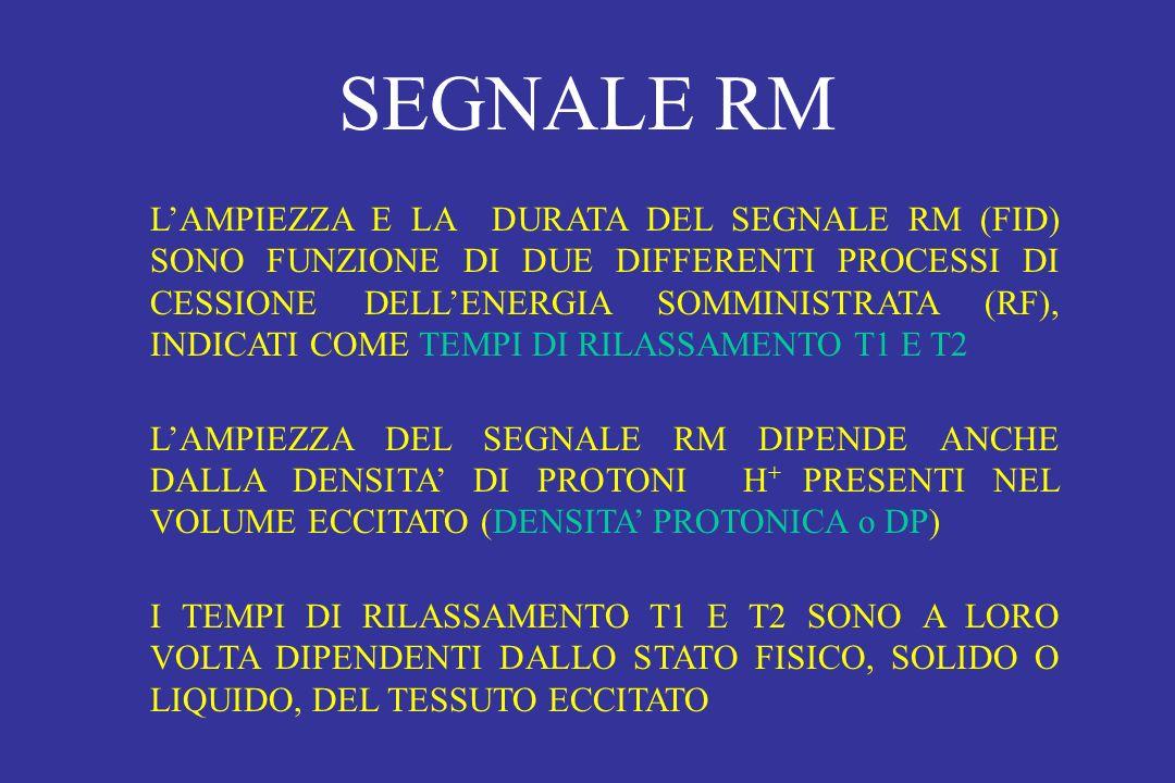SEGNALE RM