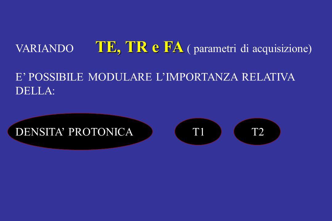 VARIANDO TE, TR e FA ( parametri di acquisizione)