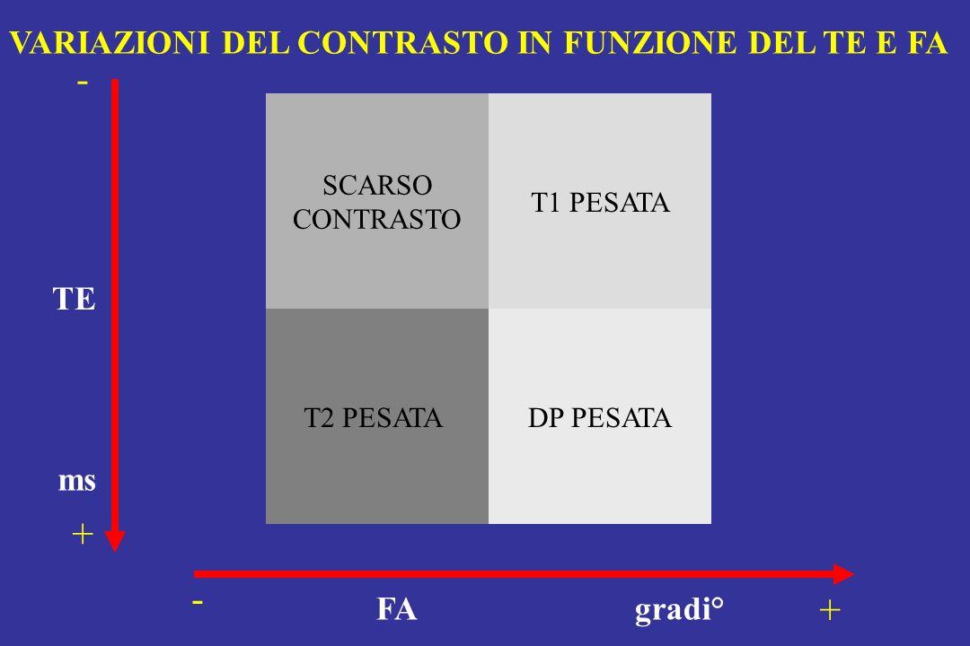 - + - + VARIAZIONI DEL CONTRASTO IN FUNZIONE DEL TE E FA TE ms