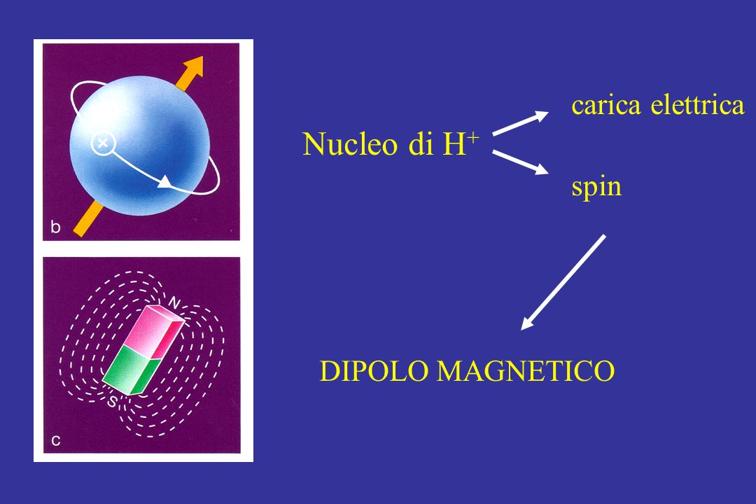 carica elettrica Nucleo di H+ spin DIPOLO MAGNETICO