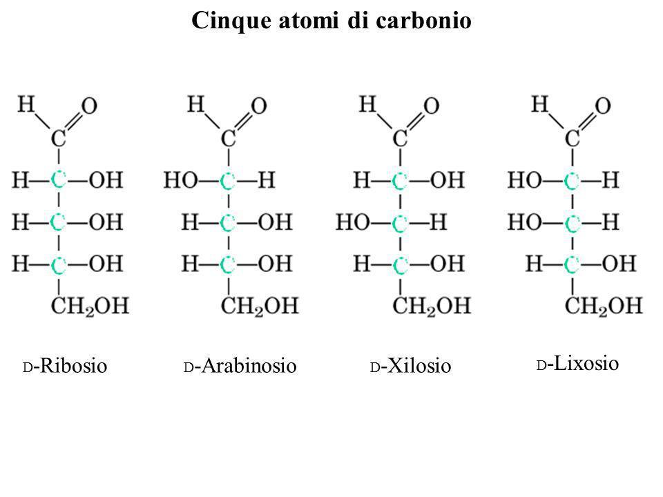 Cinque atomi di carbonio