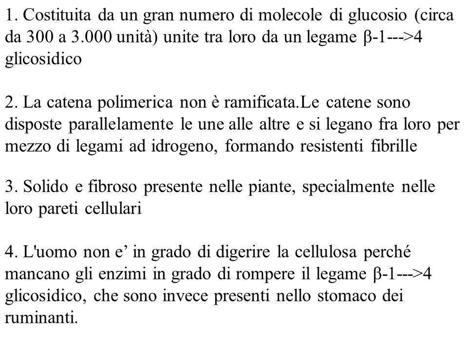 1. Costituita da un gran numero di molecole di glucosio (circa da 300 a 3.000 unità) unite tra loro da un legame β-1--->4 glicosidico