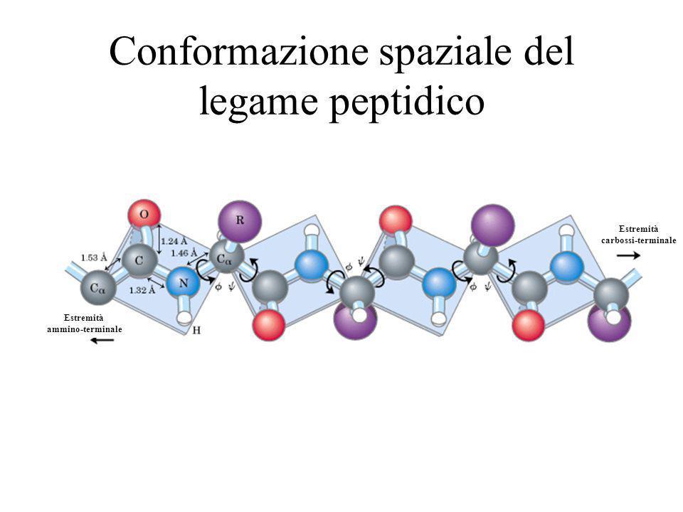 Conformazione spaziale del legame peptidico