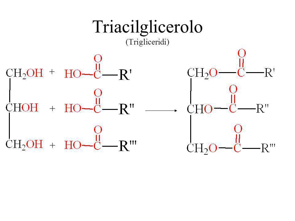 Triacilglicerolo (Trigliceridi)