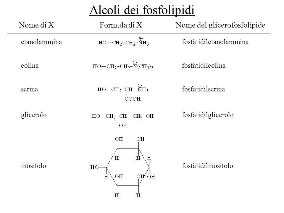 Alcoli dei fosfolipidi