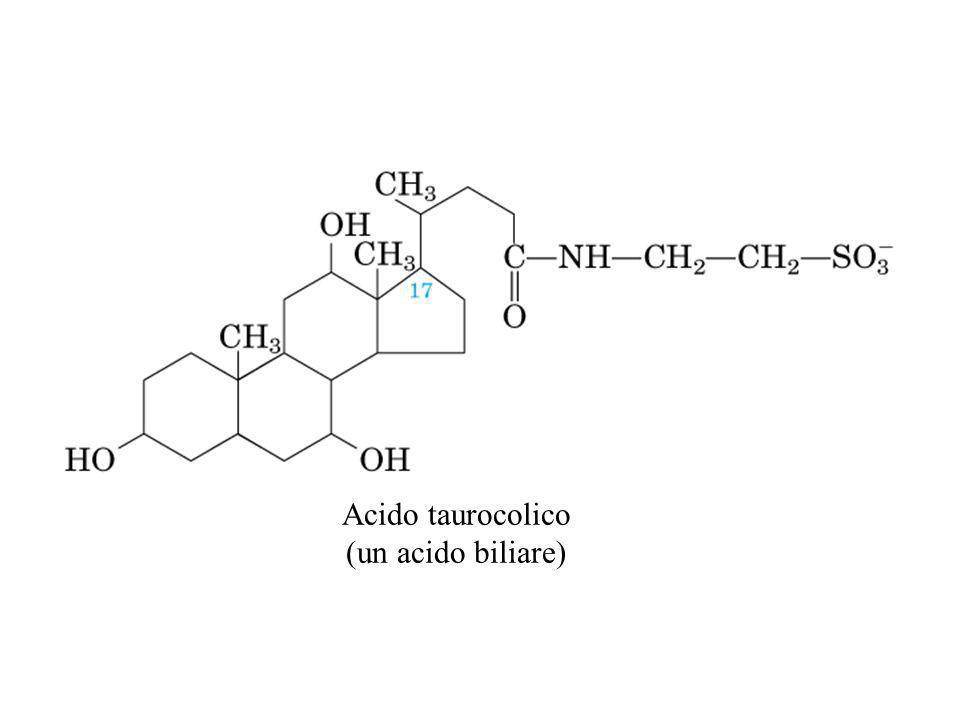 Acido taurocolico (un acido biliare)