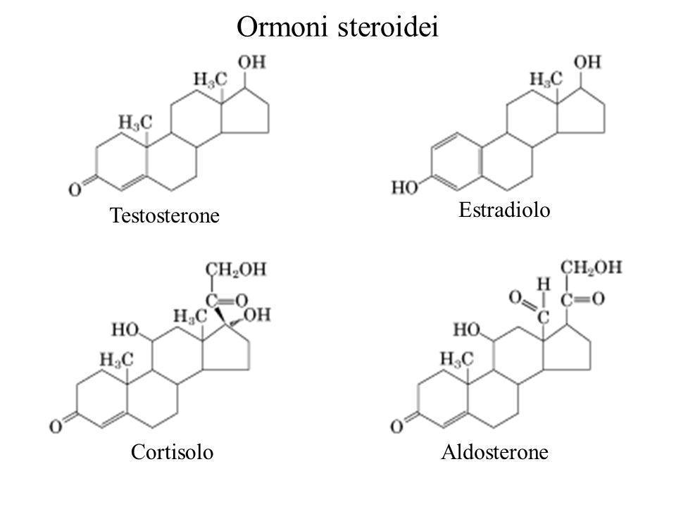 Ormoni steroidei Estradiolo Testosterone Cortisolo Aldosterone