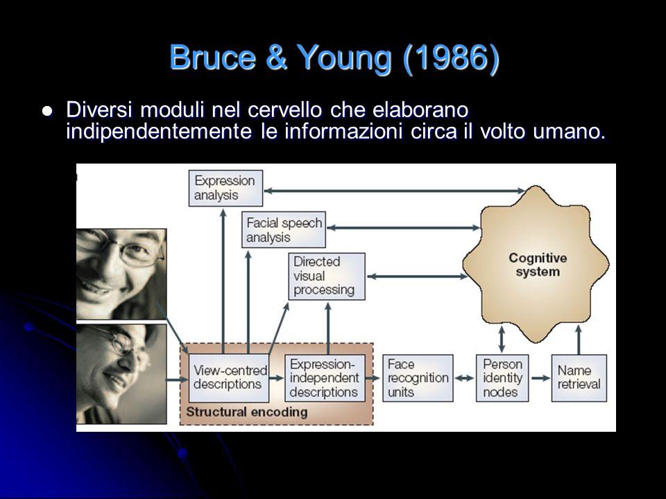 Bruce & Young (1986) Diversi moduli nel cervello che elaborano indipendentemente le informazioni circa il volto umano.