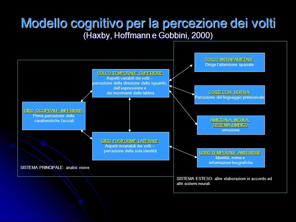 Modello cognitivo per la percezione dei volti (Haxby, Hoffmann e Gobbini, 2000)