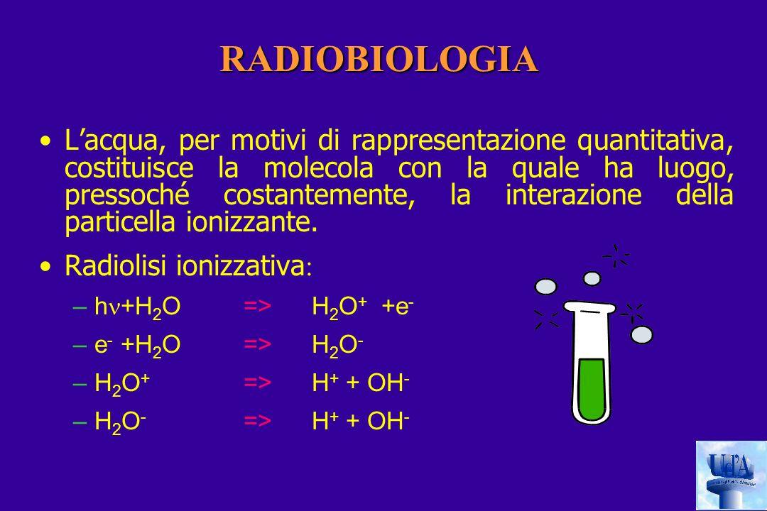 RADIOBIOLOGIA