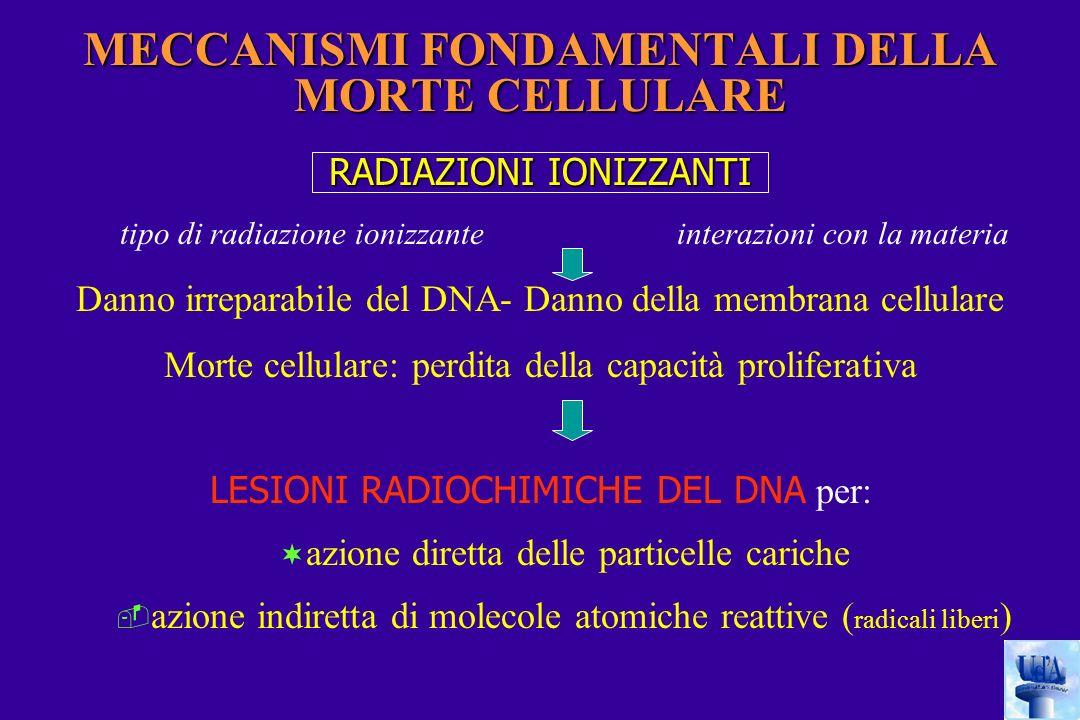 MECCANISMI FONDAMENTALI DELLA MORTE CELLULARE