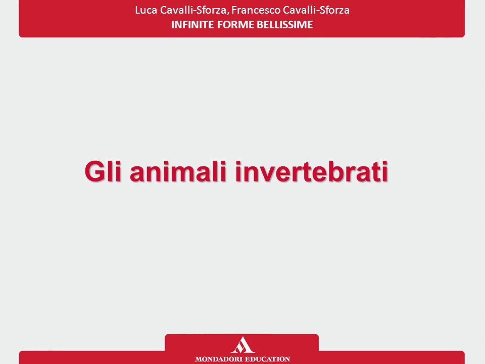 Gli animali invertebrati
