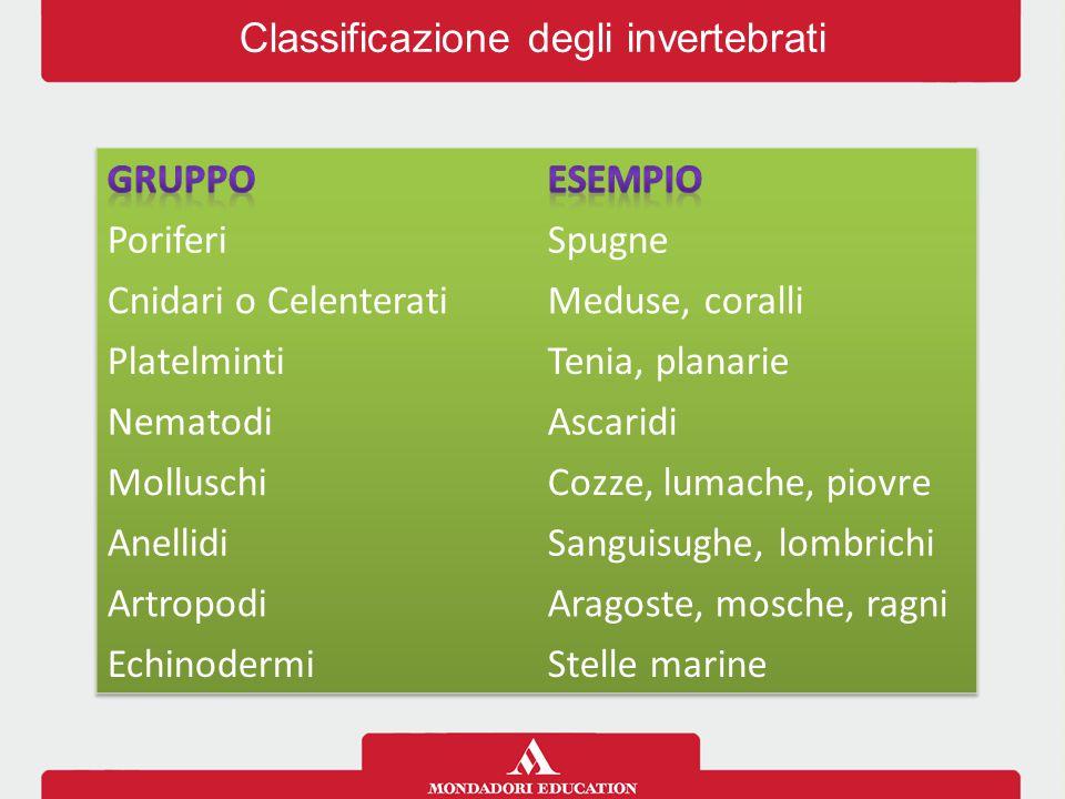 Classificazione degli invertebrati