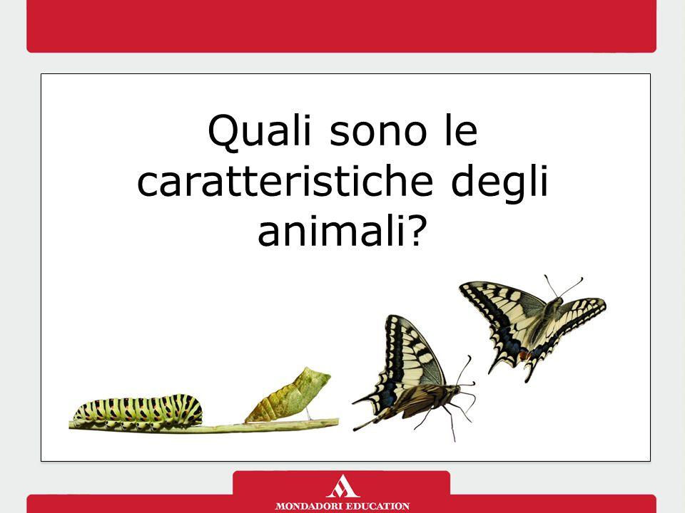 Quali sono le caratteristiche degli animali